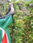 L'Économie Sociale et Solidaire: réalités, impacts et défis. Mardi 21 mai à 18h